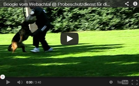 Boogie vom Webachtal Video