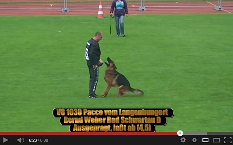 Pacco vom Langenbungert Video