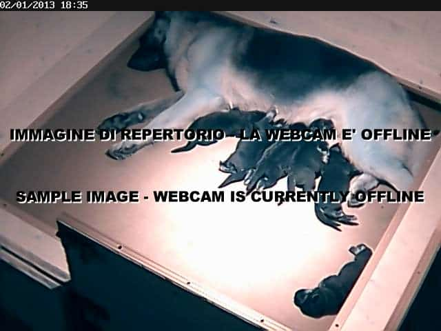puppy-webcam