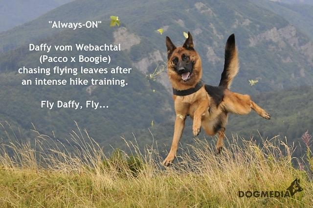 daffy-vom-webachtal-16