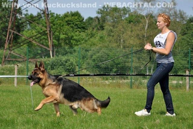 willy-vom-kuckucksland-27